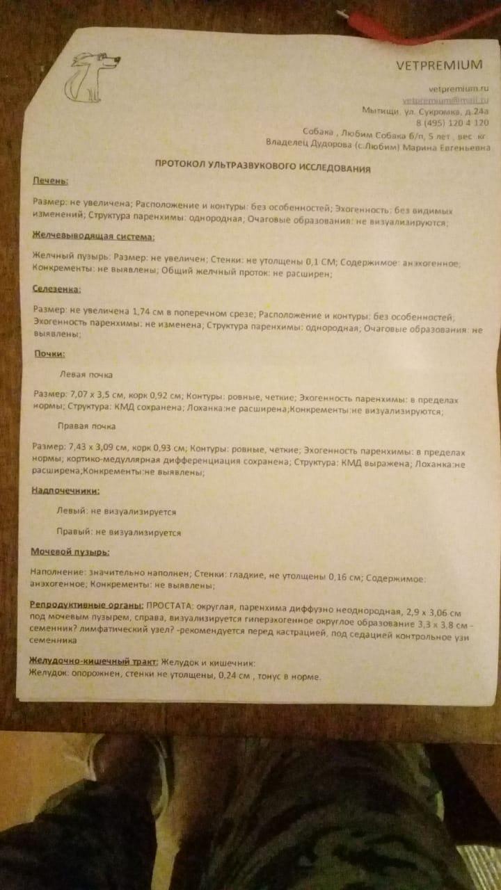 Любим-УЗИ-22_02_2020_01